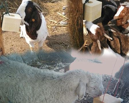 牛羊舔砖机